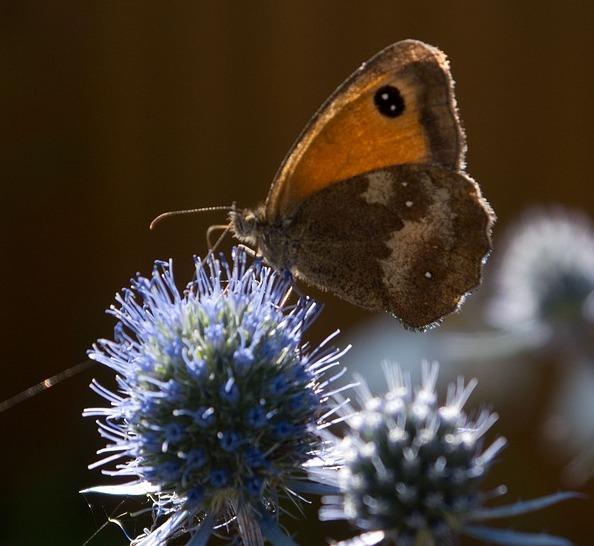 butterfly-1593524_960_720